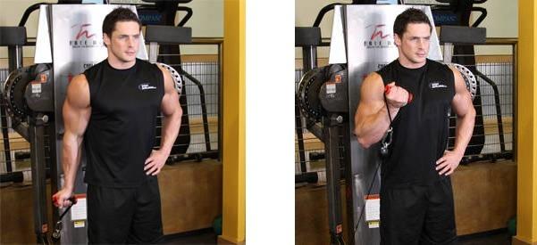 جلو بازو سیم کش ایستاده برای افزایش سایز بازو